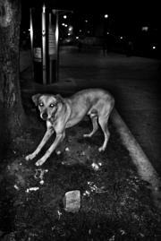 Fotografía en blanco y negro.
