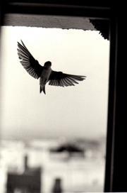 Pájaro volando tras una ventana.
