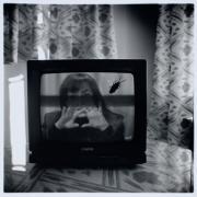 Cucaracha en la tele