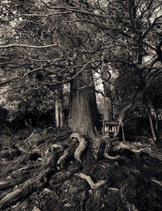 Copyright. Sanni Seppo. La isla de los esp�ritus. Lugares sagrados. Hoko Jinjya Shrine. Santuario Sinto�sta. Jap�n, 2009.